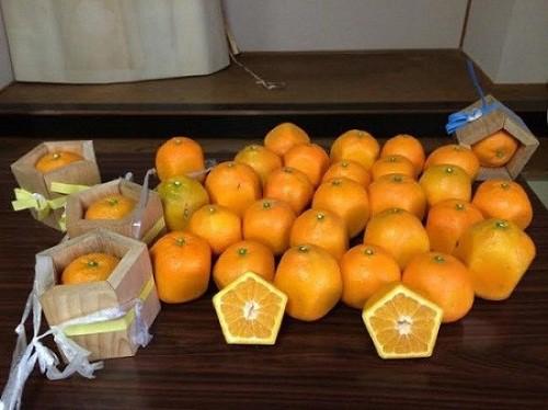 Giống cam ngũ giác do những nông dân Nhật Bản trồng được. Họ dùng những khung gỗ hình ngũ giác có hở hai đầu để đưa quả vào ngay từ khi còn nhỏ.