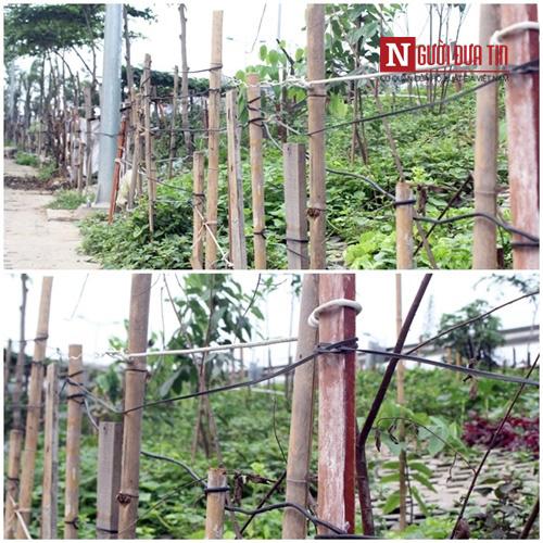 Vườn rau của mỗi gia đình đều được rào, che chắn cẩn thận.