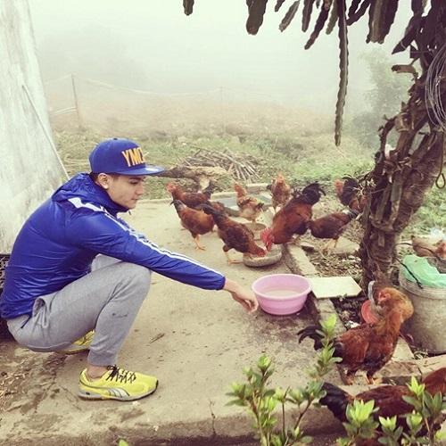 Không chỉ trồng được rau, bố mẹ Hoàng Thùy Linh còn nuôi rất nhiều gà. Siêu mẫu Vĩnh Thụy cũng đã có lần về đây và chụp ảnh với... đàn gà như thế này.