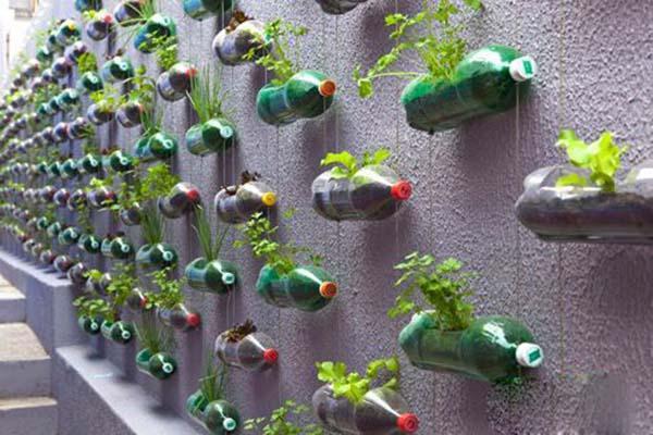 Đừng vội bỏ đi những chai nhựa như thế này bởi chúng có thể treo lên làm giàn trồng rau. Chỉ cần bỏ chút thời gian và công sức là bạn đã có ngay vườn rau sạch để ăn mà không tốn diện tích chút nào.