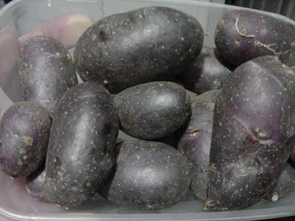 Khoai tây đen là một thuật ngữ được sử dụng cho các loại khoai tây sẫm màu đến đen sì.