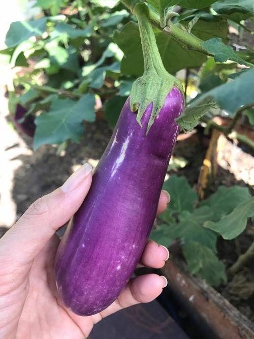 Mới trồng chưa nhiều kinh nghiệm nên Châu thường chia sẻ giống rau và học hỏi từ các bác hàng xóm lớn tuổi.