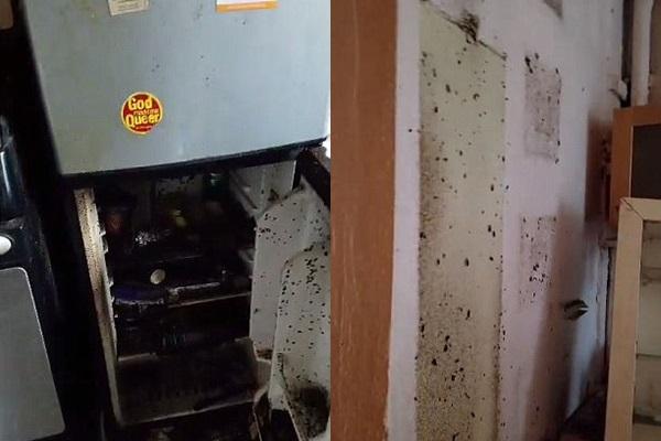 Tường thì rêu mốc bẩn thỉu, tủ lạnh thì cháy đen, vậy mà anh ta vẫn sống tốt.