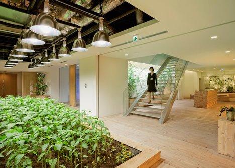 Không gian dành cho cây cối và rau củ chiếm diện tích là 3.995m2