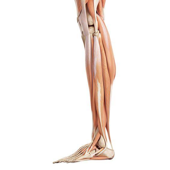 Sưng mắt cá chân cùng với cánh tay và chân yếu có thể là hậu quả của sự mất cân bằng do gan gây bệnh.