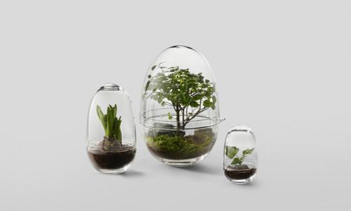 Chỉ cần một ít đất tơi xốp, một hình thủy tinh có nắp đậy là bạn sở hữu ngay một chậu bonsai mini xinh xắn. Ảnh: Gardenista.