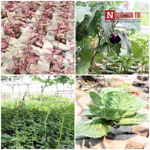 Khu vườn nhỏ nhưng không thiếu loại rau nào.