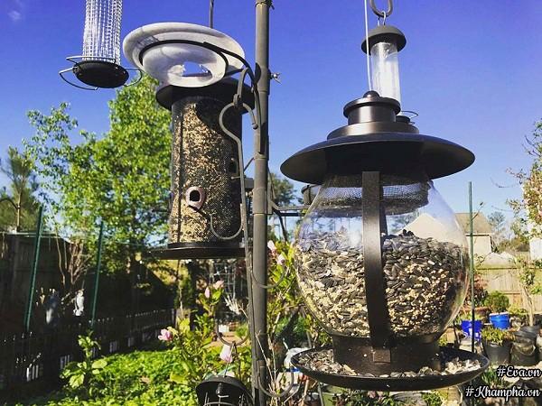Khắp vườn nhà chị Quỳnh đều đặt lồng thức ăn cho chim, nên ngày nào, chim cũng đến ăn và hót líu lo rất vui.