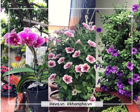 Yêu thiên nhiên và luôn ước mơ có khoảng không gian, sân vườn đẹp nên chị đã quyết định bắt tay vào xây dựng vườn hoa của riêng mình.