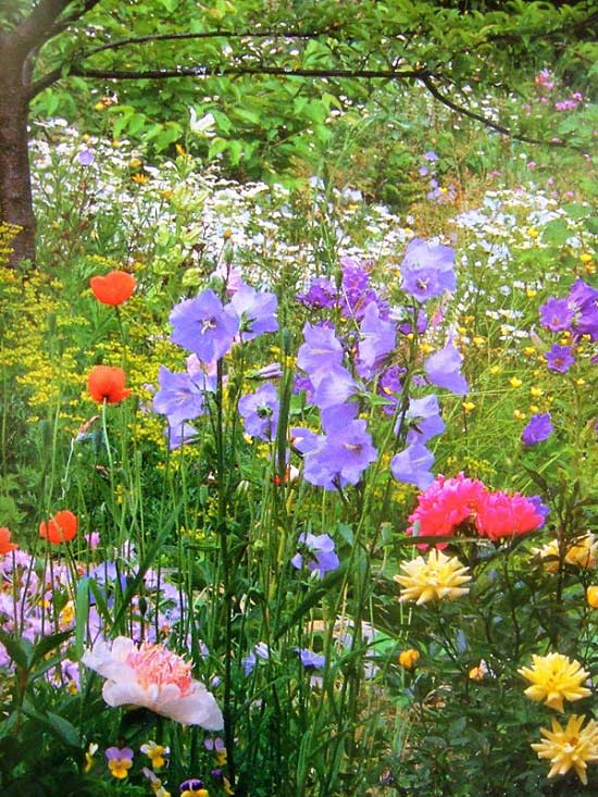 Quanh ngôi nhà, nơi đâu cũng tràn ngập sắc xanh, vẻ đẹp rực rỡ của các loài hoa, chỉ cần nhìn thôi đã cảm thấy vô cùng thư thái.