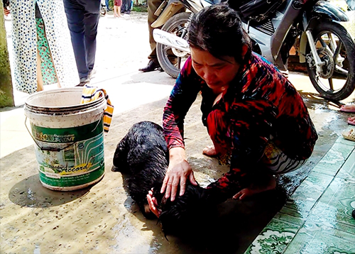 Chú chó được cứu sống nhờ dội nước lạnh. Ảnh: Tin Tin.