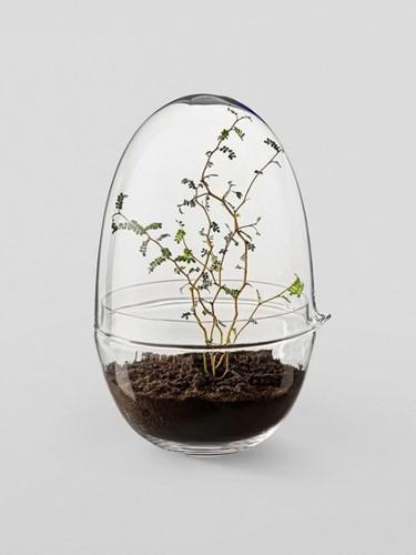 Không hoa nhưng bonsai này vẫn đủ sức gây thương nhớ bất kỳ ai. Ảnh: Gardenista.