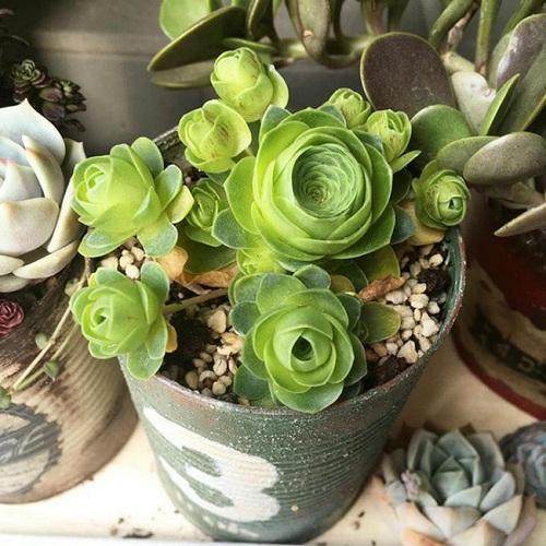 Bạn có thể dễ dàng trồng cây trong chậu nhỏ trang trí thêm cho căn nhà của mình.