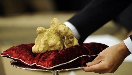 Mức giá kỷ lục cho một cây nấm Truffle trắng là 330.000 USD (hơn 6 tỷ đồng) 1,5kg nấm.