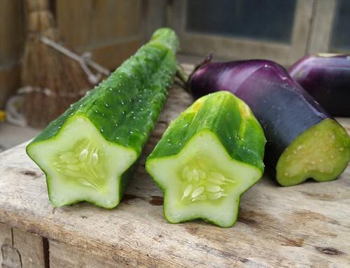Những quả dưa chuột lạ mắt sẽ khiến món salad trở nên hấp dẫn hơn.