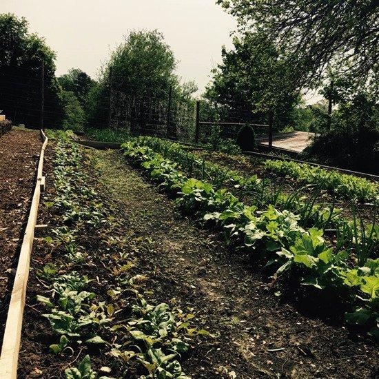 Diện tích trang trại gia đình Ngọc Khánh trải dài bát ngát. Người đẹp tận dụng đất trống để trồng rau củ, hoa màu.