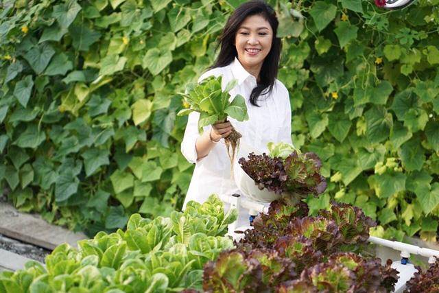 Sau khi rời chính trường, cựu Thủ tướng Thái Lan Yingluck Shinawatra đã dành thời gian rảnh rỗi của mình để chuyển sang thú điền viên tao nhã, thư thái.