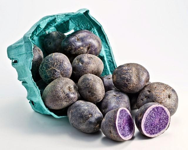 Hiện tại, khoai tây tím được trồng ở khu vực trồng khoai tây ở Nam Mỹ, Bắc Mỹ và Châu Âu. Các nhà hàng thường nhập khoai tây tím về chế biến cho các thực đơn của mình. Khoai tây tím được bán quanh năm.