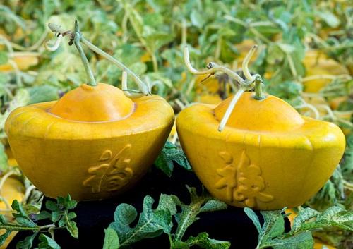 Cặp dưa hình thỏi vàng từng gây sốt có giá bán không hề rẻ.