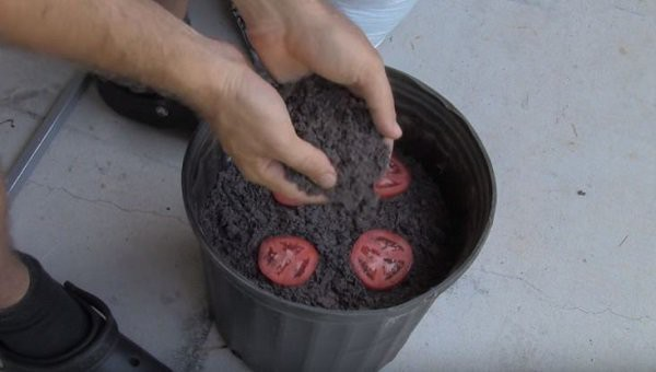 Sau khi đã đặt xong, phủ một lớp đất mỏng lên trên các miếng cà chua.