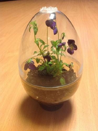 Bạn cũng có thể sử dụng chậu gốm sứ, lọ treo...để tạo bonsai độc đáo. Ảnh: Instructables.