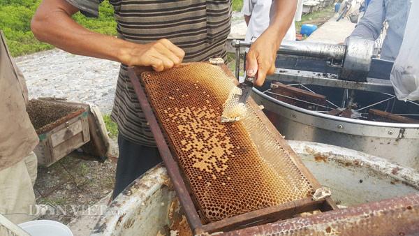 Vào mùa hoa, ong đi kiếm mật nhiều, trung bình cứ từ 3 - 5 ngày người dân ở đây lại tiến hành thu hoạch và quay lấy mật một lần.