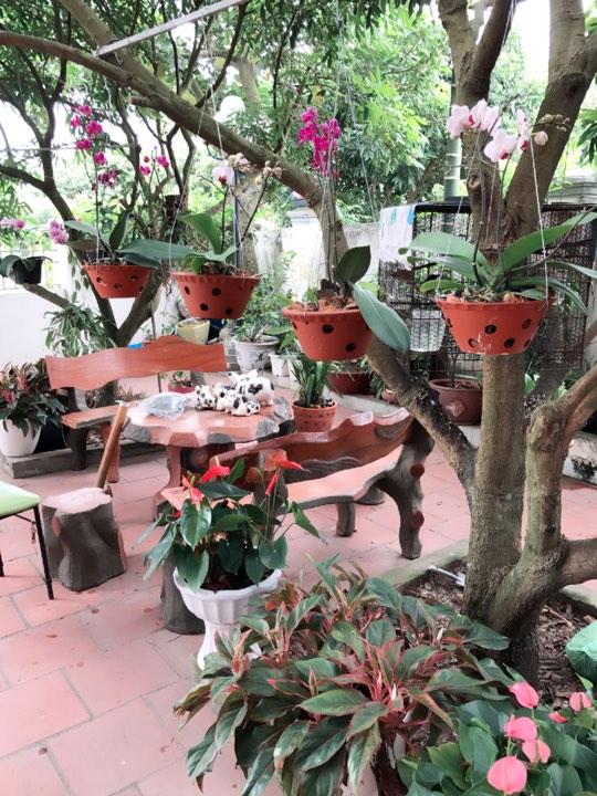 Chị Điệp còn tận dụng những cành nhãn, vải lâu năm trong sân vườn để làm giá treo các giò phong lan.
