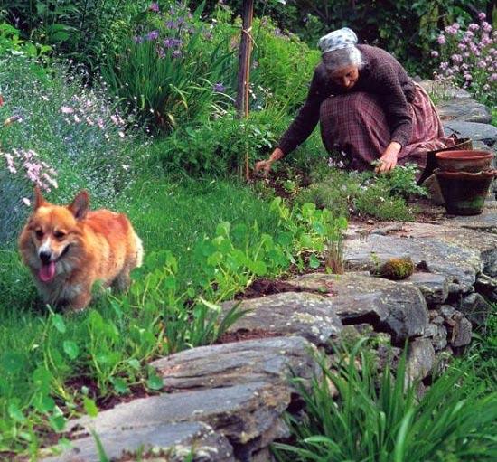 Bà Tasha rất yêu cây và hoa, bà dành nhiều thời gian cho khu vườn nhỏ của mình.