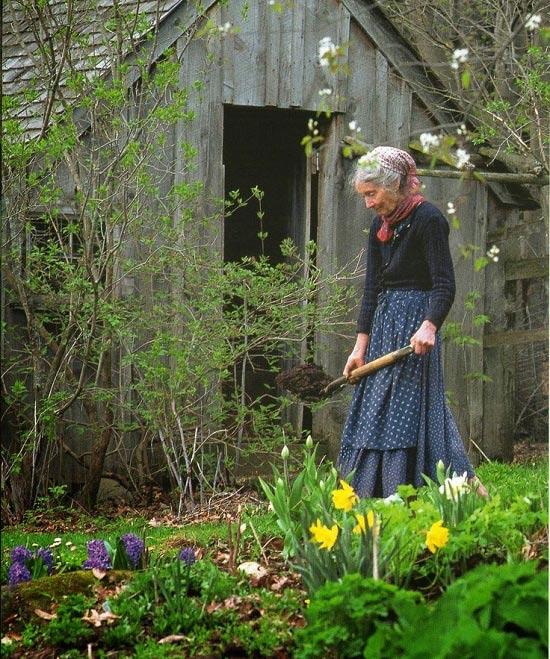 Trong vườn của bà, cây hoa nào cũng rực rỡ, cây rau nào cũng xanh tươi mơn mởn.