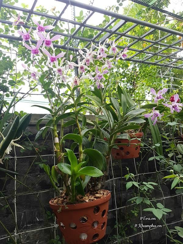Trong vườn chị Thanh trồng chủ yếu là hoa lan.