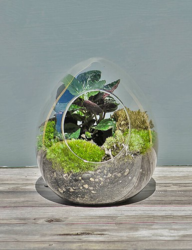 Khu vườn mini với đủ các loại hệ thực vật góp phần làm sinh động căn phòng vốn chật hẹp. Ảnh: TerrariumsForSale.