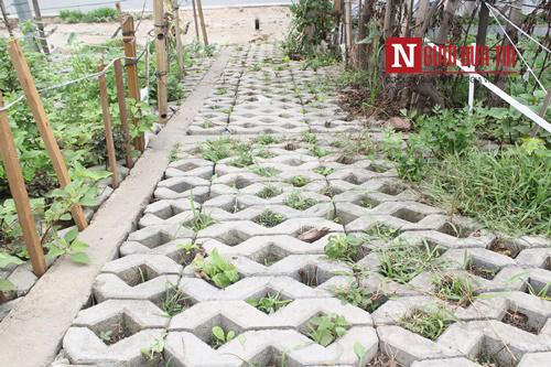 Những hốc cây khô khốc được phủ xanh bởi rau sạch.