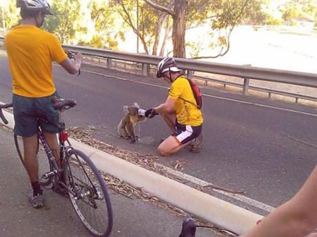 Khi thấy người hay vật gặp nạn, ra tay cứu giúp là việc nên làm. Thế nhưng cuộc sống bận rộn này khiến nhiều người chẳng còn quan tâm đến xung quanh. Thế nhưng nắng vẫn chiếu rọi, cuộc sống vẫn tươi đẹp, thế giới vẫn còn đầy người tốt và những người này là một trong số đó. Họ đã tạm dừng cuộc hành trình để cho con koala này ít nước khi nó đang dần kiệt sức vì khát.