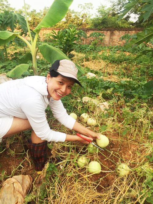 Chiều Xuân thích thú thu hoạch dưa do chính tay chị trồng.