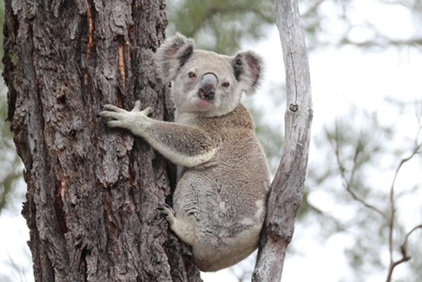Nơi đây là nơi cư ngụ của nhiều loại chim, vẹt bản địa, cũng như các loài động vật khác như nhím, thỏ, nai, gấu koala.