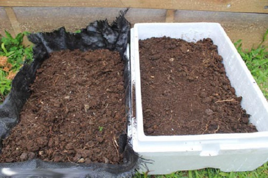 Đất mùn hữu cơ hoặc đất thịt nhẹ rất thích hợp để trồng cây dưa chuột.