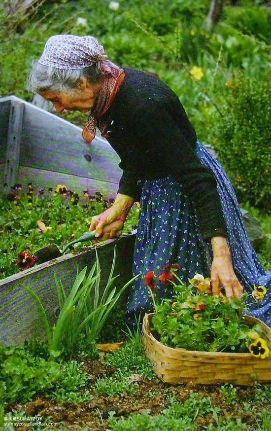 Cuộc sống của bà Tasha luôn bận rộn, nhưng bận rộn trong tâm thế thoải mái và luôn tràn ngập niềm vui trong khu vườn nhỏ.