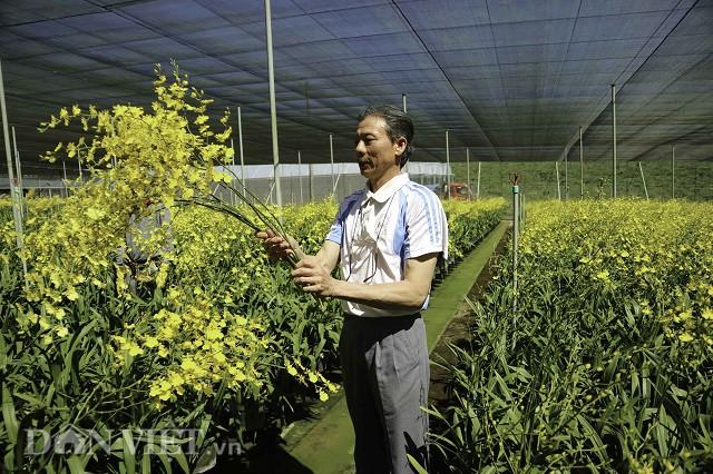 Ông Cao Xuân Hải bên mô hình trồng lan vũ nữ được xem là hiện đại nhất huyện Di Linh của mình. Ảnh: Văn Long.