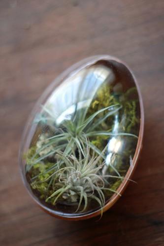 Những chậu bonsai này có thể trang trí trên bàn phòng khách, phòng ăn, góc làm việc...Ảnh: Thehousethatlarsbuilt.