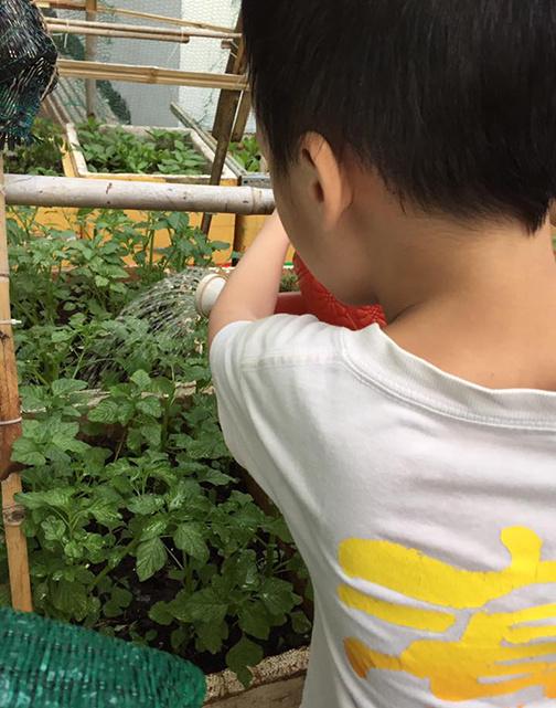 Có vườn rau xanh, cả nhà chị ai cũng hào hứng, coi đây như một thú giải trí hàng ngày. Mọi người cũng có thêm một cơ hội để san sẻ công việc cùng nhau. Khi chị đi làm, bố mẹ chị sẽ tiếp quản việc chăm vườn. Còn cậu con trai của chị sau mỗi buổi học cũng hào hứng tưới tắm cho cây.