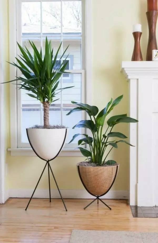 10. Đơn giản mà tinh tế, kệ và chậu trồng cây độc đáo này hẳn sẽ gây ấn tượng với khách đến chơi nhà. Sản phẩm có giá 160$.