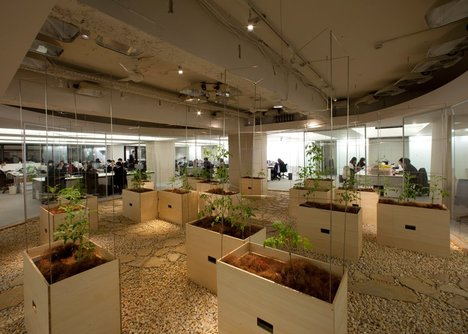 Các bồn cây được bố trí rải rác như một cách trang trí nội thất mới cho văn phòng
