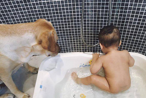 Chơi đùa với chú chó cưng kể cả khi đi tắm