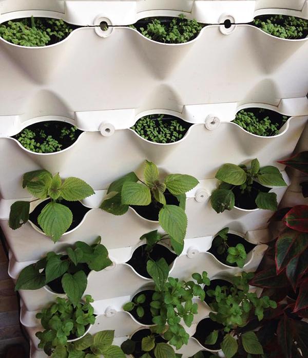 Một ngôi nhà với diện tích khiêm tốn cũng có thể nuôi ước mơ trồng rau sạch tại nhà. Ảnh: T.G