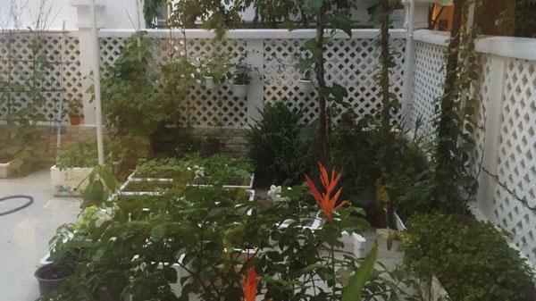 Bà xã Công Vinh cho biết khu vườn rộng gần 100 m2 trồng đủ các loại rau. Vì thế, mỗi lần cần nấu món ăn quê hương yêu thích, cô chỉ cần mang rổ ra vườn là có ngay nồi canh thanh mát, ngọt lịm.