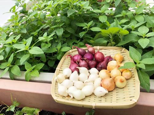 Căn bếp của gia đình chị Hương tại Đài Loan không khi nào vắng mặt những loại rau gia vị Việt. Chị thường xuyên chế biến các món ăn truyền thống bằng rau trong vườn để chia sẻ nét văn hóa Việt Nam với ông xã, giúp con gái hiểu thêm về quê hương của mẹ.
