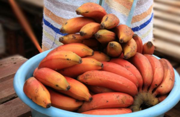 Những loại quả đem lại may mắn đừng nên bỏ qua dịp Tết Mậu Tuất