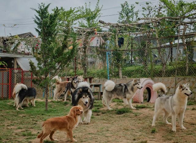 Trang trại Black Rock Garden Đà Lạt do Minh Trí tự tay thiết kế (ảnh nhân vật cung cấp).