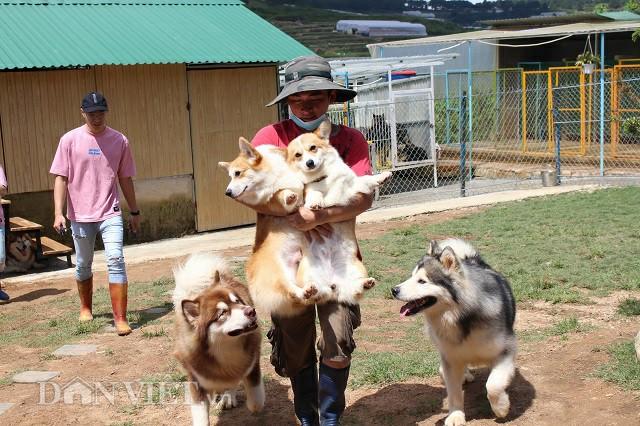 Những chú chó mới được vệ sinh và sấy lông sau đó đưa lên sân chơi để chụp hình với khách. Ảnh: Văn Long.