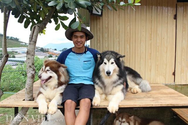 Minh Trí bên hai chú chó Alaska, giống chó ban đầu anh nuôi để gây dựng lên trang trại. Ảnh: Văn Long.